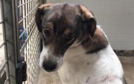 La canina Lorenza, 9 mesi, nel canile di Pistoia