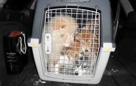 I cuccioli salvati dalla Forestale di Arezzo