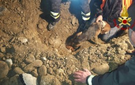 I Vigili del Fuoco di Petrazzi sono riusciti a salvare i due cani