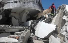 L'eroico cane Dayko, morto per infarto, durante la ricerca di superstiti in Ecuador