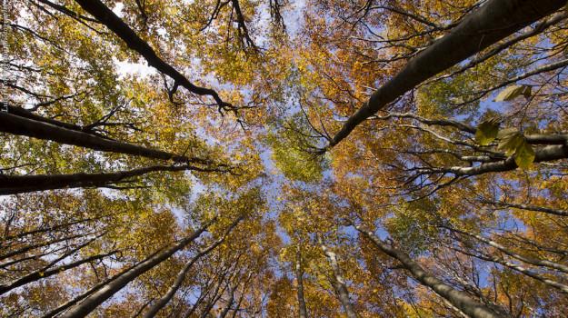 """Il nuovo centro """"Esplora"""" di Firenze offrirà educazione ambientale alle scuole"""