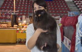 Oltre 500 esemplari di gatti alla mostra di Prato