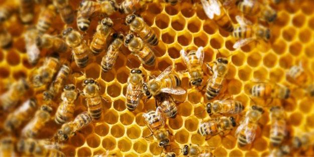Un alveare di api