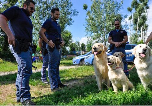 Polizia Golden Retriever