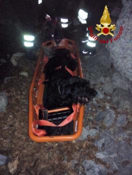 Il cane salvato dai Vigili del Fuoco a Canale Barra sul monte Pania Secca