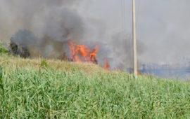 Un incendio sta attaccando la vegetazione sulla via Castiglionese a Grosseto