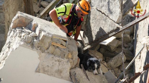 Un cane dei Vigili del Fuoco addestrato per la ricerca di persone sepolte vive
