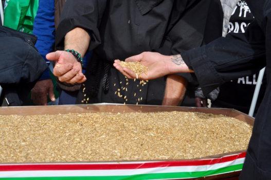 Rischia di bloccarsi la produzione del grano italiano