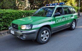 Gli automezzi dei Carabinieri già del Corpo Forestale hanno mantenuto il tradizionale colore verde