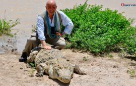 Nello stagno di Bazoulè in Burkina Faso i coccodrilli sfamati si lasciano fotografare dai turisti