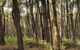 """""""Il bosco è un patrimonio trascurato"""" dice Orazio Ciancio presidente Aisf"""