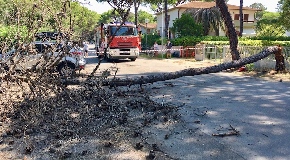 Principina a Mare, cade un pino sulla strada. Sfiorata tragedia