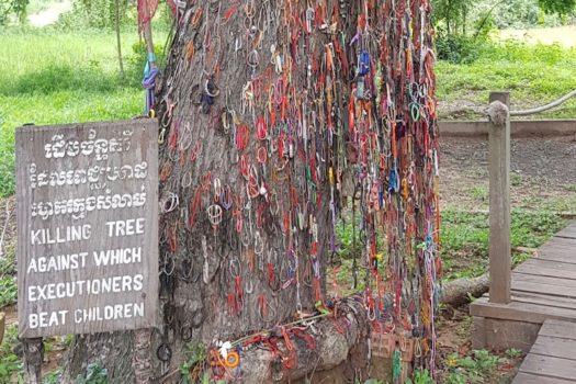 Uno degli alberi dove venivano uccisi bambini e neonati sbattendoli contro i tronchi