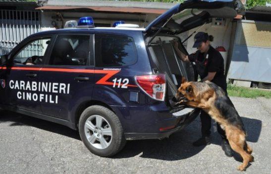 Una unità cinofila dei Carabinieri
