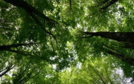 Vallombrosa celebra i 150 dei suoi preziosi arboreti